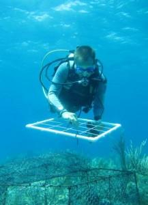 Næringsstoffer skader hurtigt koraller. Foto: Oregon State University.