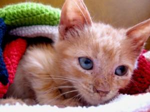 Kattekillinger er søde, men de kommer uden man ønsker det, og de kommer ikke når man kalder. Foto: Arkiv.