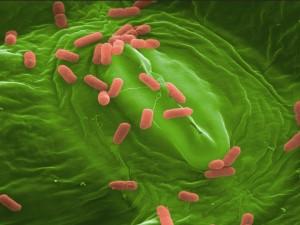 Konserveringsmidler i maden i små doser kan gøre bakterier resistente over for antibiotika. Foto: Rob Shaw.