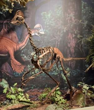 Men en højde på over tre meter var dinosauren Anzu wyliei ikke sin tids største rovdinosaur, men nok alligevel en af de løjerligset. Foto: Carnegie Museum of Natural History