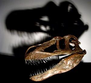 Europas største rovdyr nogen siden er sandsynligvis den fem tons tunge dinosaur Torvosaurus gurneyi. Foto: Christophe Hendrickx