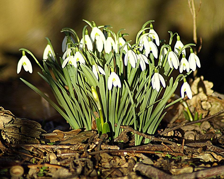blomster forår klimaændringer
