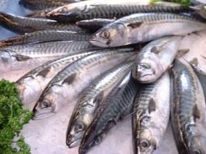 Omega-3 fedtsyrer fra fede fisk hæmmer diabetisk øjensygdom. Foto: Jastrow.
