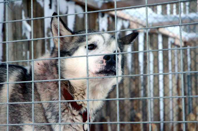 Hundene var ivrige efter at komme ud i Svalbards vinter.