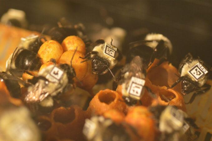 Neonicotinoider bier opførsel