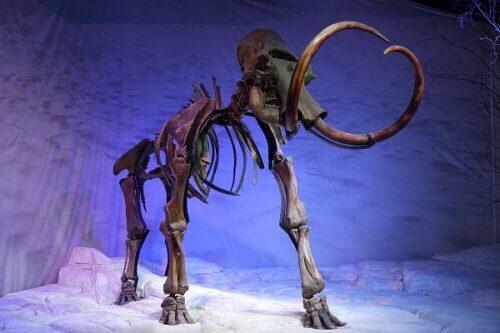 Mammut uddød